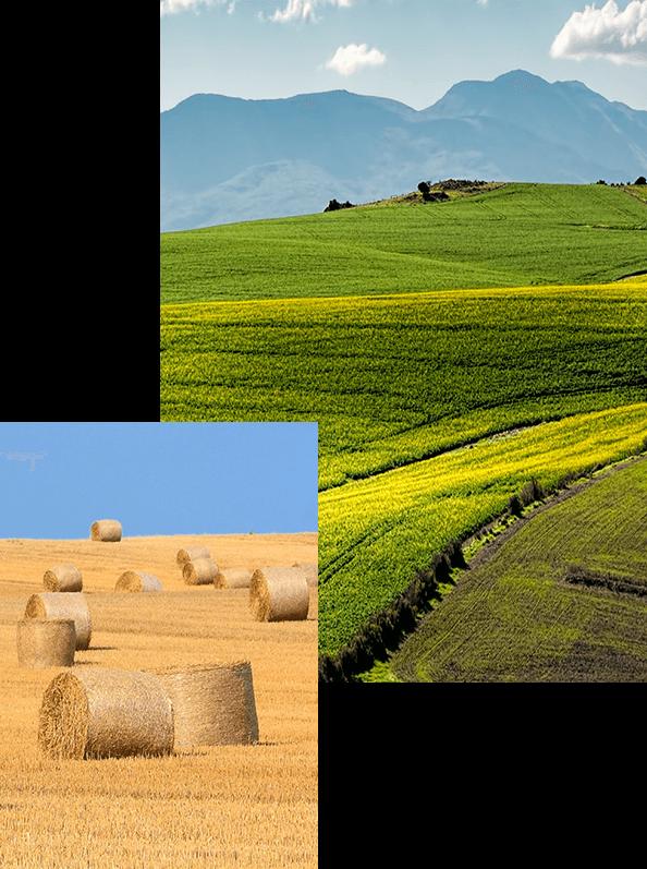 acidos humicos y fulvicos hectareas