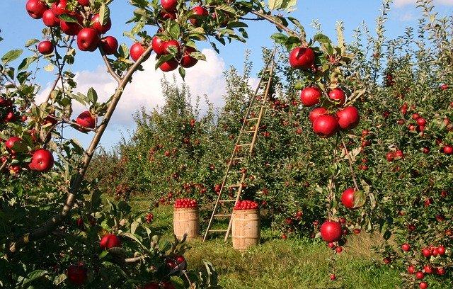 Manzanas acidos humicos