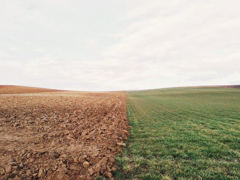 suelo rejuvenecido leonardita